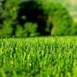 Fertilizer Bid Estimate