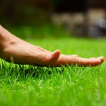 Fertilizer Lawn Bid Estimate