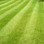 Fertilizer Lawns Estimate Bid