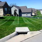 Fertilizer and Aeration