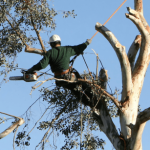 Tree Service - Tree Trimming - Tree Removal