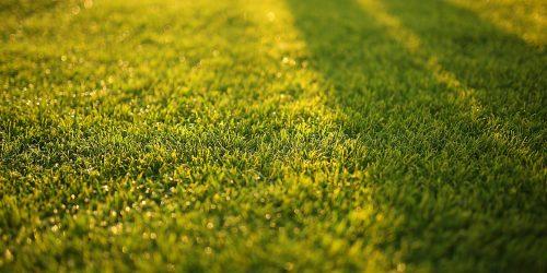 Lawn Care Program, Lawn Fertilization, Weed Control, Aeration